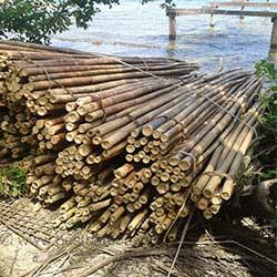 bambus im bau