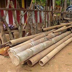 bambus stämme=